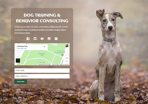 Dog Training and Behavior Consulting theme